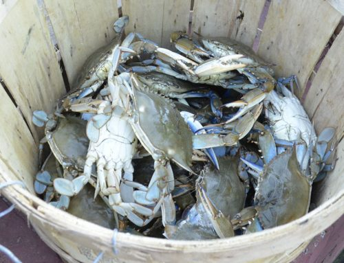 Top Places to Go Crabbing in Southern Anne Arundel County