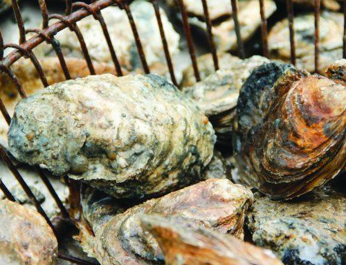 Aw Shucks: Oyster Season's Just Around the Corner